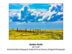 "Golden Fields • <a style=""font-size:0.8em;"" href=""http://www.flickr.com/photos/124378531@N04/48880608527/"" target=""_blank"">View on Flickr</a>"