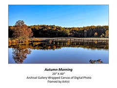 "Autumn Morning • <a style=""font-size:0.8em;"" href=""http://www.flickr.com/photos/124378531@N04/48880608787/"" target=""_blank"">View on Flickr</a>"