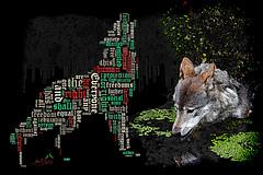 Welcome the Wolf! (SØS'Art) Tags: animals beastofprey canoneos7d closeup collection danmark detail detalje digiart dyr filterforge photomanipulation photoshop rovdyr solveigøsterøschrøder ulv wolf zoologiskhavekøbenhavn art artistic