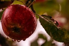 2019-10-11 14.20.43 - Efterår, Uge 41, Assentoft, Randers - _DSC6334 - ©Anders Gisle Larsson