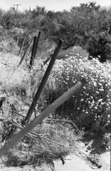 \F/e\n/c\e/ \P/o\s/t\s/ (squirtiesdad) Tags: slanting fence posts summit valley high desert zenit et helios44m epson v600 monochrome blackandwhite bw bn bwfp analog analogue arista iso100 35mm film