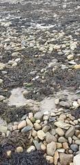 20191001_121239 (seashorty) Tags: plasticbottle littermarine