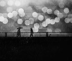 Under the rain (Fan.D & Dav.C Photgraphy) Tags: no people circle luminosity abstract celebration night sky defocused flying spotted firework black background lantern festival white rain walking city monochrome streetphotography streeturbainphotography streetbnw streetart streetumbrella bnwmagazine bnwcreative bnwroad bnwcity blackandwhitestreetphotography blackandwhitephotography urbainsphotographie urbainsstreet