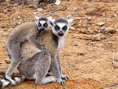 Madagascar (AykutPamuk) Tags: