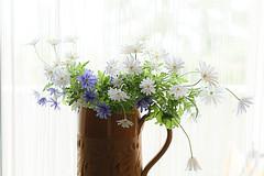 Wild Flowers (pasquale di marzo) Tags: flowers fiori controluce spontanei colore 2019