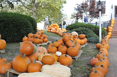 _DSC7158 (horslips5) Tags: newengland chatham capecod massachusetts fall autumn