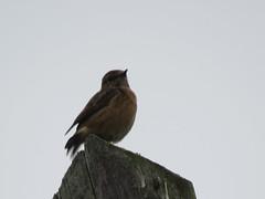IMG_1013 (jesust793) Tags: pájaros birds naturaleza nature