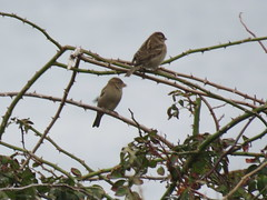 IMG_1110 (jesust793) Tags: pájaros birds naturaleza nature