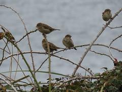 IMG_1114 (jesust793) Tags: pájaros birds naturaleza nature