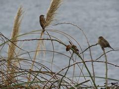 IMG_1131 (jesust793) Tags: pájaros birds naturaleza nature