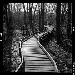 Among the trees Morvan - France (2019) Film #89, view#2 Yashica 12 - Ilford HP5+ Developed in caffenol CH (vincent-photo) Tags: blackwhite bw alternative caffenol caffenolch film hp5 ilford mediumformat square tlr twinlensreflex vintage 6x6 yashica yashica12 yashicaffenol 120