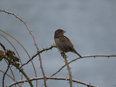 IMG_1128 (jesust793) Tags: pájaros birds naturaleza nature