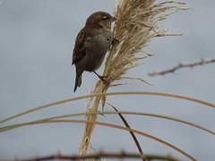 IMG_1134 (jesust793) Tags: pájaros birds naturaleza nature