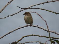 IMG_1142 (jesust793) Tags: pájaros birds naturaleza nature