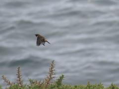 IMG_1190 (jesust793) Tags: pájaros birds mar sea naturaleza nature