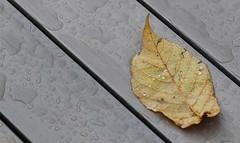 6Q3A3352 (www.ilkkajukarainen.fi) Tags: lehti leaf suomi finland finlande eu europa scandinavia happy life line töölö visit travel travelling helsinki autumn syksy wood puu 2019