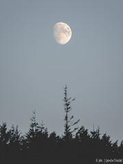 Lune forestière (Quentin Douchet) Tags: auvergnerhônealpes france loire nature parcnaturelrégional parcnaturelrégionaldupilat pilat landscape lune moon paysage