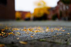 here we are (kceuppens) Tags: fall herfst kleur color season leaf leafs nikon d810 nikond810 nikkor247028vr nikkor 2470 antwerpen antwerp stad low grond
