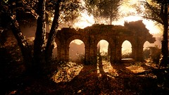 The ruins (Tom) Tags: ruins tree forest autumn