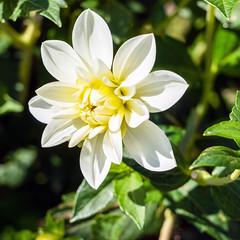 Flower (Bephep2010) Tags: 2019 7markiii alpha bern blume blüte ilce7m3 oberried oberriedambrienzersee sel24105g schweiz sommer sony switzerland blossom flower summer ⍺7iii kantonbern