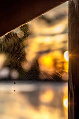 Numero uno (Michele Fantini) Tags: uno one spider ragno ragnatela web light luce sun sole alba sunrise mirroreye