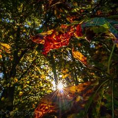 A burst of colour and light. (Darren Speak) Tags: sunshine starburst autumn leafs trees colour