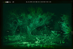 Day 11: We Are Watching You (Amazing Aperture Photography) Tags: halloween happyhalloween halloween2019 fun scary spooky creepy horror celebrate festive october fall autumn decorate holiday fear terrifying gore 31daysofhalloween amazingaperturephotography creative sonya7rii green night dark nightmare creatures monsters ghouls predators prey desert desertnight lost trees plants cactus cacti eyes glowing glowingeyes nightvision nightvisiongoggles