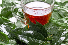 Cup of tea and fresh green leaves with drops of water (wuestenigel) Tags: glass cup ingredient leaves closeup healthy natural green portion fresh background tea nature 2019 2020 2021 2022 2023 2024 2025 2026 2027
