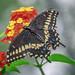Butterfly Garden of Wisconsin (Appleton, Wisconsin)
