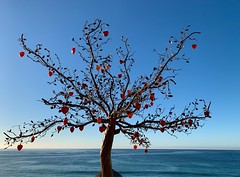 Tree of Love (remiklitsch) Tags: ocean morning blue red color tree love glass hearts landscape mexico panoramic iphone phonography remiklitsch lasventanas