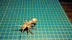 Ant designed by Satoshi Kamiya folded by me (webb.colin.1) Tags: origami ant satoshi kamiya