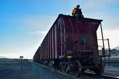 Hawk Vango Sitting on Train (Toasto) Tags: train freight freighttrain trainhopping trainhopper railroad shippingcontainer longlinesofsteel
