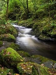 Water Cascade (ivanstevensphotography) Tags: river colours green wet rain autumn autumnal trees foliage ferns moss rock rocks cascade water gorge
