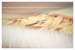 Adaminaby in Spring (Peter & Olga) Tags: adaminaby snowymountainsregion spring multiples landscape modern art abstract interpretation filter fujifilm sunset grasses hills 2019 olgabaldock