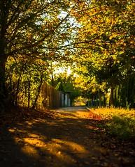 Autumn (mladencoko) Tags: fujifilmxe1 jupiter8 50mmf2 l39lens autumncolours bokeh bokehrama oldlenses fujifilm mirrorlesscamera colors naturallight autumnvibes