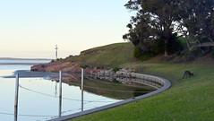 800_4339 (Lox Pix) Tags: mallacoota victoria australia scenery sunset loxpix l0xpix loxwerx landscape kangaroo caravanpark lighthouse waves birds ocean reflections clouds loxpixmallacoota