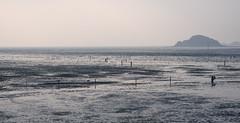 Low Tide (TigerPal) Tags: korea southkorea republicofkorea rok eastasia yeongjongdo sea shore coast beach tide tidalflat tidal korean masianbeach clam seafood coastal incheon people lowtide