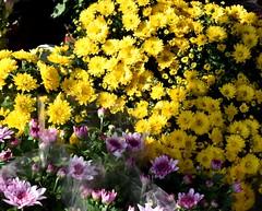 Flowers for sale (thomasgorman1) Tags: flowers yellow street colors nikon germany berlin