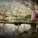 The Pond (Explored)