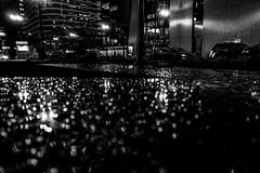 Rain (RW Sinclair) Tags: 2019 autumn carl chicago dscrx100m3 digital fall m3 october rx100 rx100m3 rx100iii sony variosonnar zeiss iii bnw blackandwhite monochrome rain raindrops