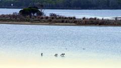 800_4332 (Lox Pix) Tags: mallacoota victoria australia scenery sunset loxpix l0xpix loxwerx landscape kangaroo caravanpark lighthouse waves birds ocean reflections clouds loxpixmallacoota