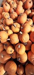 20191010_161540 (CSFS at UBC Farm) Tags: pumpkins