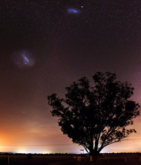 Magellanic Clouds at Harvey, Western Australia (inefekt69) Tags: harvey large magellanic cloud panorama stitched mosaic southern hemisphere cosmos western australia dslr long exposure night photography nikon stars astronomy space galaxy astrophotography outdoor ancient sky 35mm d5500 landscape tracked ioptron skytracker star tracking tree smallmagellaniccloud clouds
