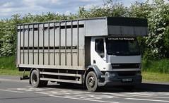 MX53 DYH At Oswestry (Joshhowells27) Tags: lorry truck daf lf daflf unmarked livestock cattle mx53dyh