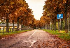 Herbstliche Kontraste (KaAuenwasser) Tags: herbst herbstlich kontraste kontrast farben farbe kunst künstlich baum bäume allee kastanien kastanienallee strase hdr pferderennbahn iffezheim mittag licht schatten blätter laub 2019