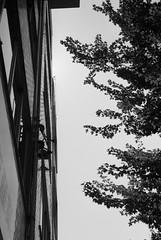 September 2019_33 (Satoshi Kondo) Tags: blackandwhitephoto
