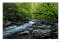 Flowing through Shadows (John Cothron) Tags: americansouth cpl cothronphotography distagon2128ze distagont2821ze dixie eastsouthcentralstates georgiaphotographer greatsmokymountainnationalpark johncothron middlepronglittleriver seviercounty sevierville southernregion tennessee thesouth tremont us usa usaphotography unitedstatesofamerica volunteerstate zeissdistagont2821ze afternoonlight circularpolarizingfilter clearsky creek flowing forest freshwater landscape longexposure moss nature outdoor outside river rock scenic spring stream sunny vegetation water 257155d4180430coweb10122019 ©johncothron2018 flowingthroughshadows