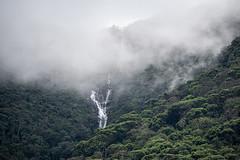 Regenwald 1 (Thomas SAP) Tags: 2019 srilanka