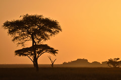 Serengueti (Enrica F) Tags: serengueti tanzania áfrica nikon nature amanecer sunrise safari