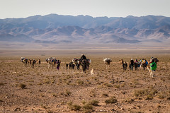 From the Sahara desert to the Atlas mountains (graham2034) Tags: atlas sahara desert mules camels